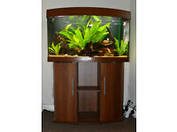 Juwel Vision 180 Bow Fronted Aquarium And Stand