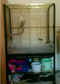 Cockatiels with cage