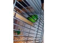 Green linnie bird and vision cage