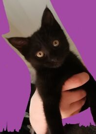 Loving Kitten to a Good Home +toys & accessories
