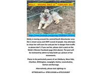 VERY SCARED STREET DOG MISSING SIGHTINGS NEEDED