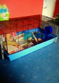 2 gerbils and very large cage (inc. Accessories)