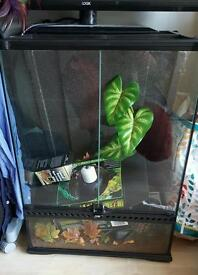 Chemeleon Gecko Frog Reptile Starter Vivarium