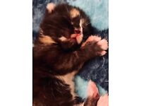 Beautiful kittens varied prices please read description