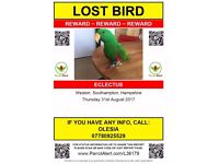 !!! HELP !!! Lost Eclectus