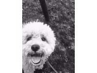 Friendly Dog Walker/ Sitter