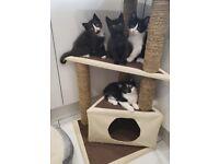 Sweet happy clean 8 week old kittens 😸
