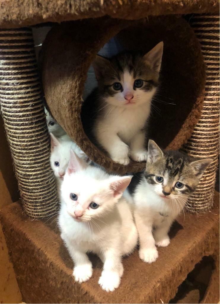 5 Kittens For Sale In South East London London Gumtree