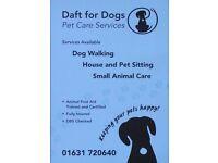 Experienced Dog Walker & Pet Sitter