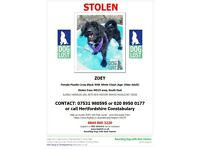 *STOLEN DOG FROM NAWT RESCUE CENTRE*