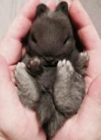 Baby Bunnies in time for Christmas