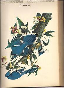 "AUDOBON'S ""BIRDS OF AMERICA"" 1941 REPRINT Belleville Belleville Area image 5"
