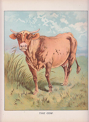 COWS COW IN PASTURE CATTLE LITHO ANTIQUE PRINT 1892