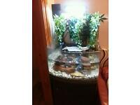 3 terrapin and tank with cabinet full set up