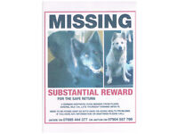 £3000 reward for Stolen/ lost 2 german shepherds Plains Airdrie