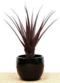 2 X Artificial Spiky Burgundy Pandanus Plant - 96cm high