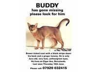 **BUDDY IS MISSING** disappeared on Thurs 15th June 2017 from Surbiton.