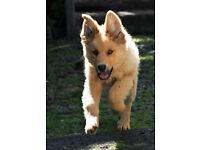 Dog Walker/ Dog Walking Services/ Pet Sitting/Pet Boarding Service