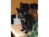 Lost black cat called Poppy