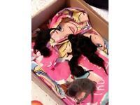 Six beautiful kitten's
