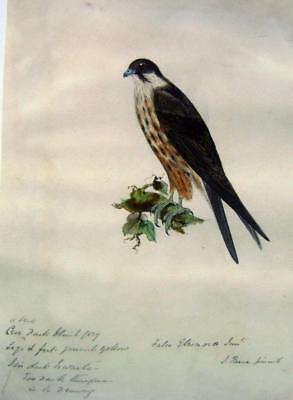 BIRDS A BIRD OF PREY  J REESE W/COL C1830