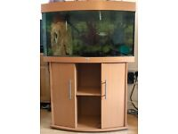 Juwel Vision 180 fish tank and fish