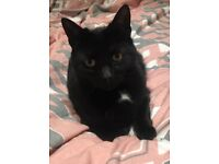 Missing black cat with small white patch on neck