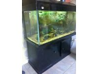 Large Fish Tank & Stand