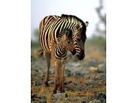 ENVIRONMENTAL & WILDLIFE CONSERVATION WORK - SOUTH AFRICA