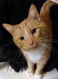 Zany needs a loving indoor only home
