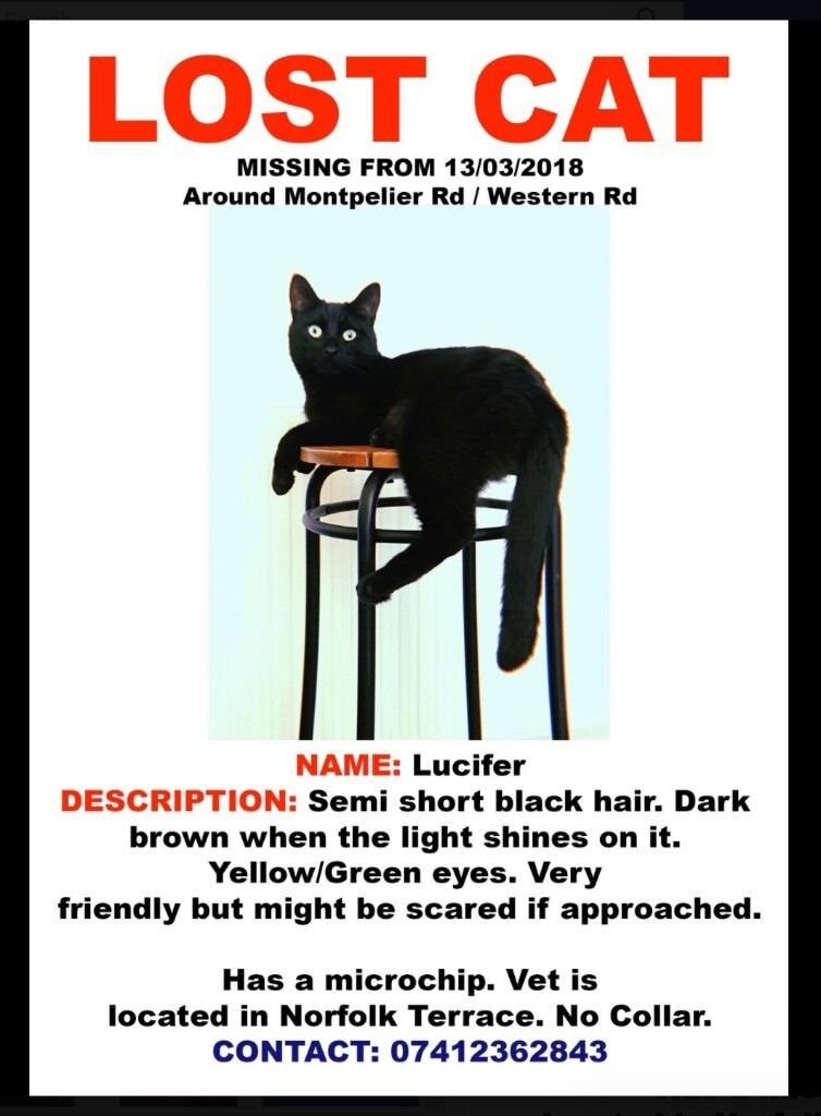 PLEASE HELP US FIND OUR LOST BLACK CAT!