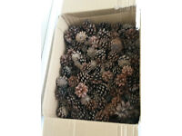 Pine Cones Box Mixed Sizes Natural Dried Decoration Christmas Wreath Craft Floral Hanging
