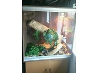 large vivexotic vivarium for reptile + all accessories + corn snake