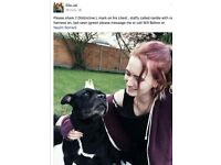 Please help! Lost 10 year old staffy, last seen jgreen. Black with white L on chest