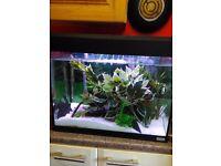 Fluval aquarium fish tank full set up