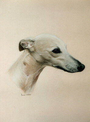 WHIPPET CHARMING DOG GREETINGS NOTE CARD BEAUTIFUL DOG HEAD STUDY