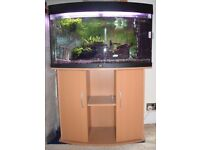 BOW FRONT 3ft fish tank