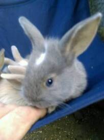 Selection of baby rabbits ready to go for sale