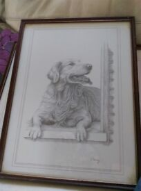 Beautiful Hand Drawn Golden Retriever framed picture