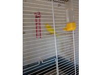 BUDGIE FEMALE - YELLOW