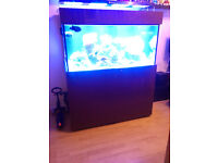 Marine fish tank, led lights, jebao pumps, skimmer etc