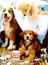 Large Quantity CATS & DOGS GREETING CARDS (Naughty Pups) WITH DIFFERENT STYLE AND DESIGN