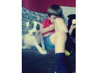 johnston bulldog