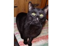 Could you offer Bear, the cat, a loving home?