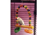 2 budgies need new home,with or without cage.