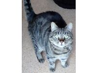 Jess is looking for a caring home