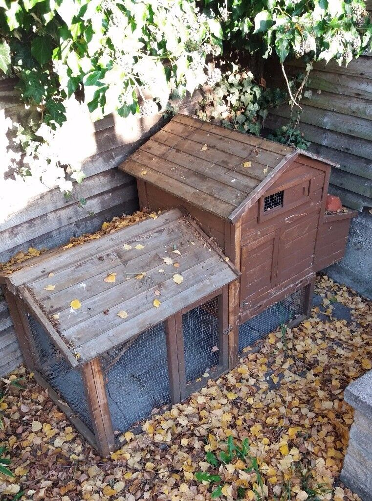 Hutch or coop and run for Guinea pigs or hens