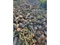 Unprocessed hardwood logs, firewood