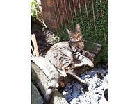 Missing cat :(