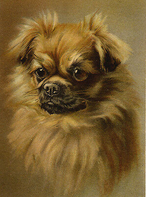 TIBETAN SPANIEL CHARMING DOG GREETINGS NOTE CARD CUTE DOG HEAD STUDY